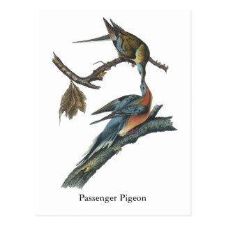 Passenger Pigeon, John Audubon Postcard