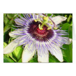 Passiflora Close Up With Garden Background Card