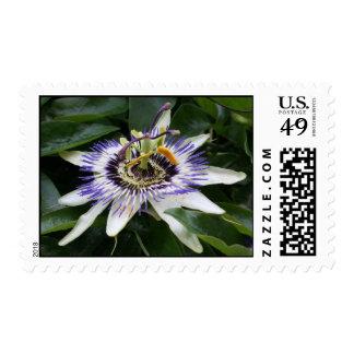 Passiflora - Floral Photogaphy - Postage