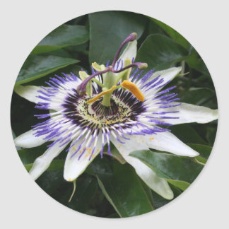 Passiflora - Floral Photography Classic Round Sticker