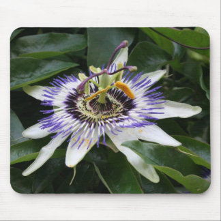 Passiflora- Floral Photography Mouse Pad