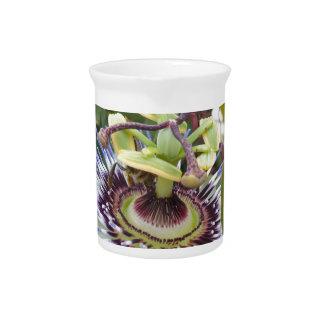 Passiflora Pitcher