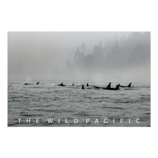 Passing Orcas Poster