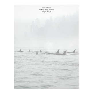 Passing Whales Letterhead