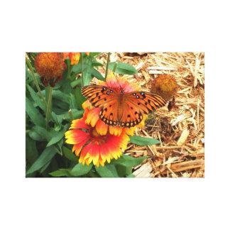 Passion Butterfly on my Gaillardia Pulchella Canvas Print