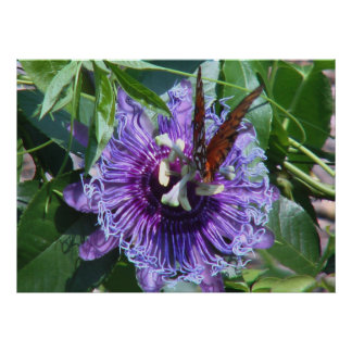 Passion Flower and Butterfly Poster