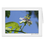 Passion Flower and the Sky Greeting Card