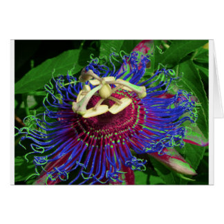 passion_flower card