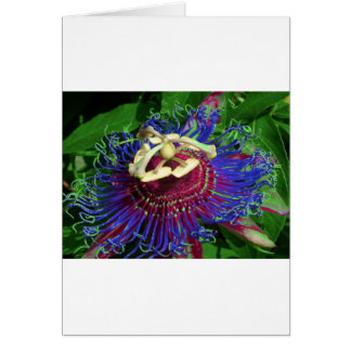 passion_flower cards