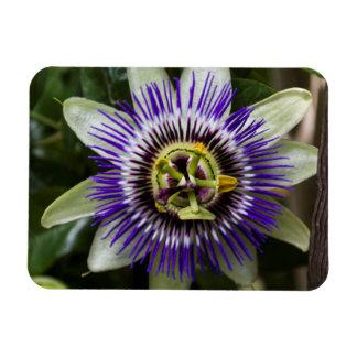 Passion Flower Kitchen Magnet