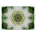 Passion Flower Mandala Cards