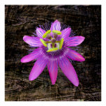 Passion Flower on Wood Grain Posters