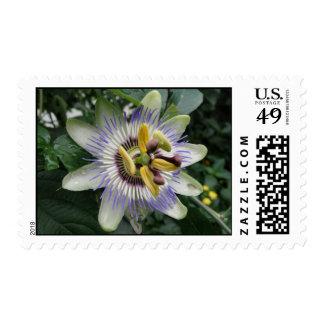 Passion Flower Postage Stamp