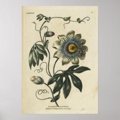 flower clip art outline. Betel clip art, outline