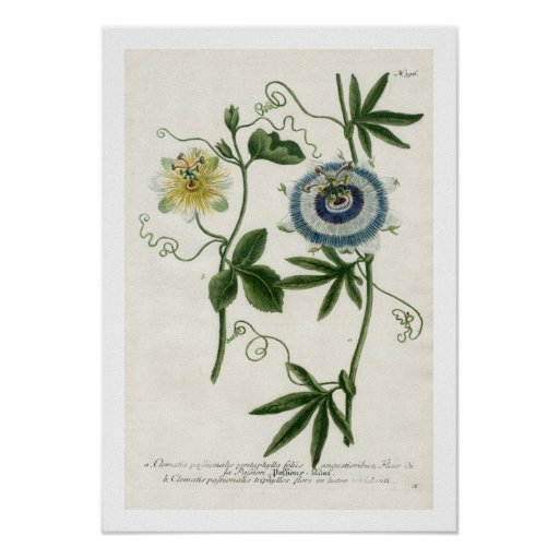 Passion Flower Print