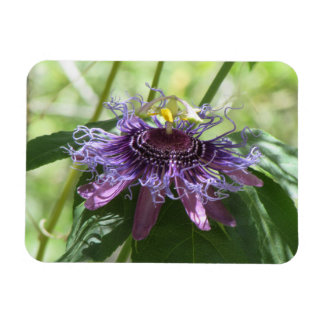 Passion Flower Rectangular Photo Magnet