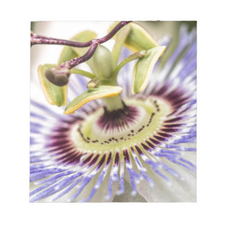 Passion Flower Scratch Pad