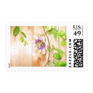Passion Flower Vine Stamp