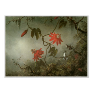 Passion Flowers and Hummingbirds Poster