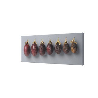 Passion fruit aging gallery wrapped canvas