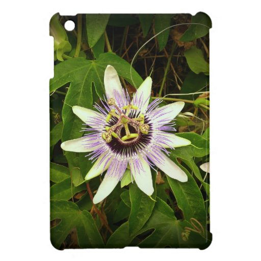 Passion Fruit Flower iPad Mini Cover