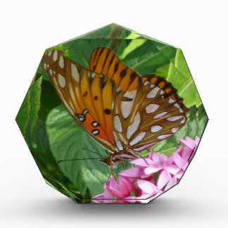 Passion Vine Butterfly Award