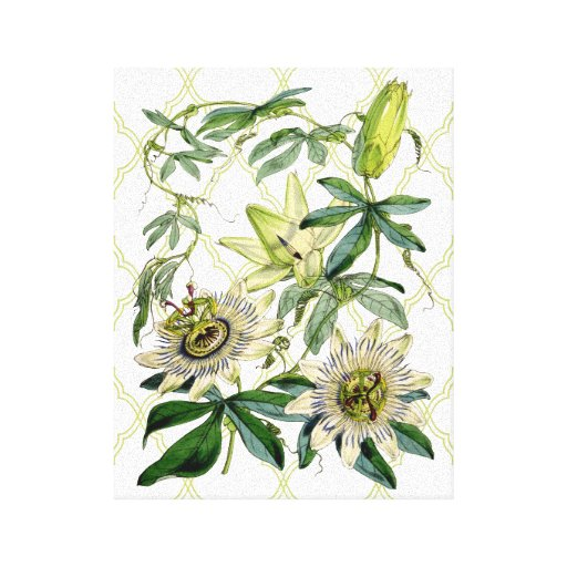 Passion Vine Gallery Wrapped Canvas