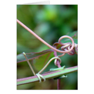 Passion Vine ~ Why Knot?! Card