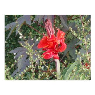 passionate flower postcard