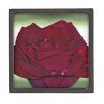 Passionate Red Rose Premium Trinket Box