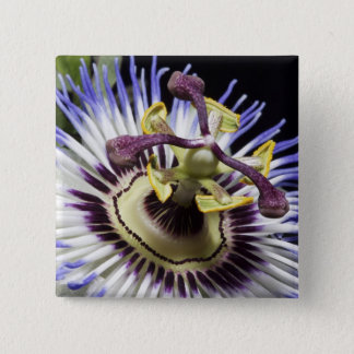Passionflower close-up (MR) Button
