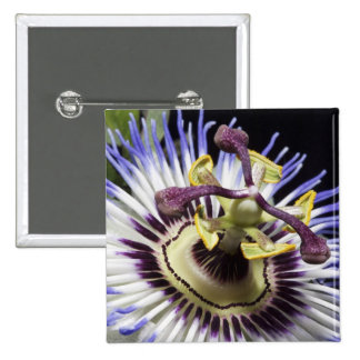 Passionflower close-up (MR) 2 Inch Square Button
