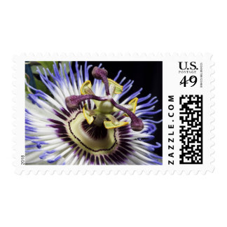Passionflower close-up (MR) Stamp