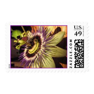 passionflower envio