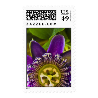 Passionflower Sello