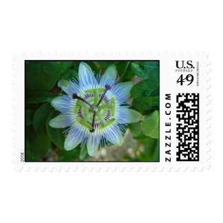 Passionfruit Flower Stamps