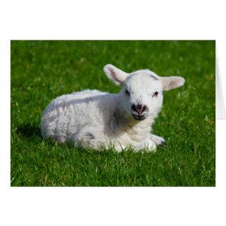 Passover Lamb, Isaiah 53 Card