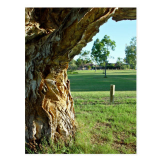 Past paperbark tree across park postcard