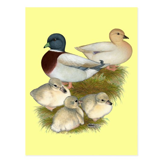 Pastel Call Duck Family Postcard