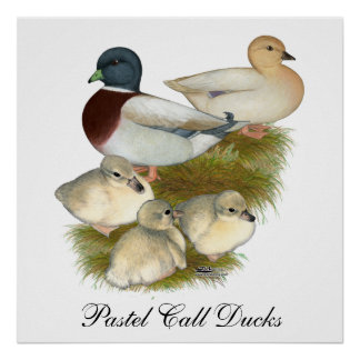 Pastel Call Duck Family Poster