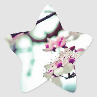 Pastel cherry blossom photo star sticker