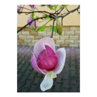 pastel colored magnolia poster