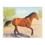 Pastel de caoba del caballo de bahía tarjeta postal