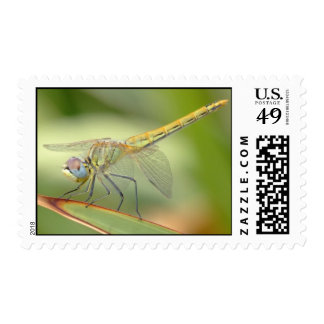 Pastel Dragonfly Postage