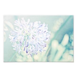 Pastel Flowers Photo Print