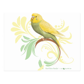Pastel Green Parakeet Postcard