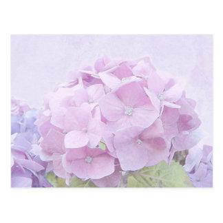 Pastel Hydrangea Flowers Postcard