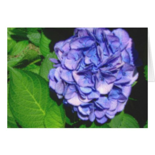 pastel hydrangea notecard stationery note card