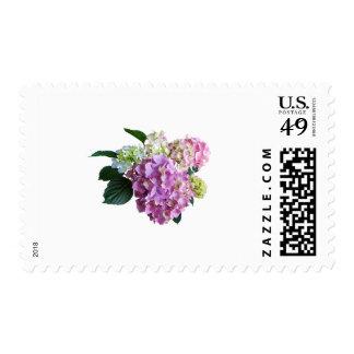 Pastel Hydrangea Postage