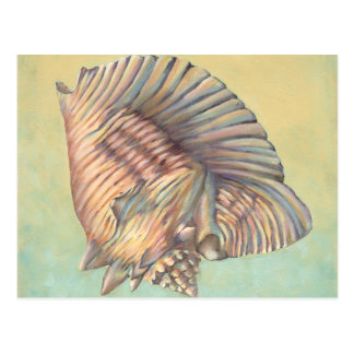 Pastel Large Conch Shell Postcard